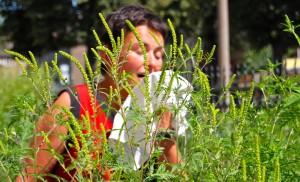 Frau nießend mit Taschentuch hinter Ambrosiapflanzen